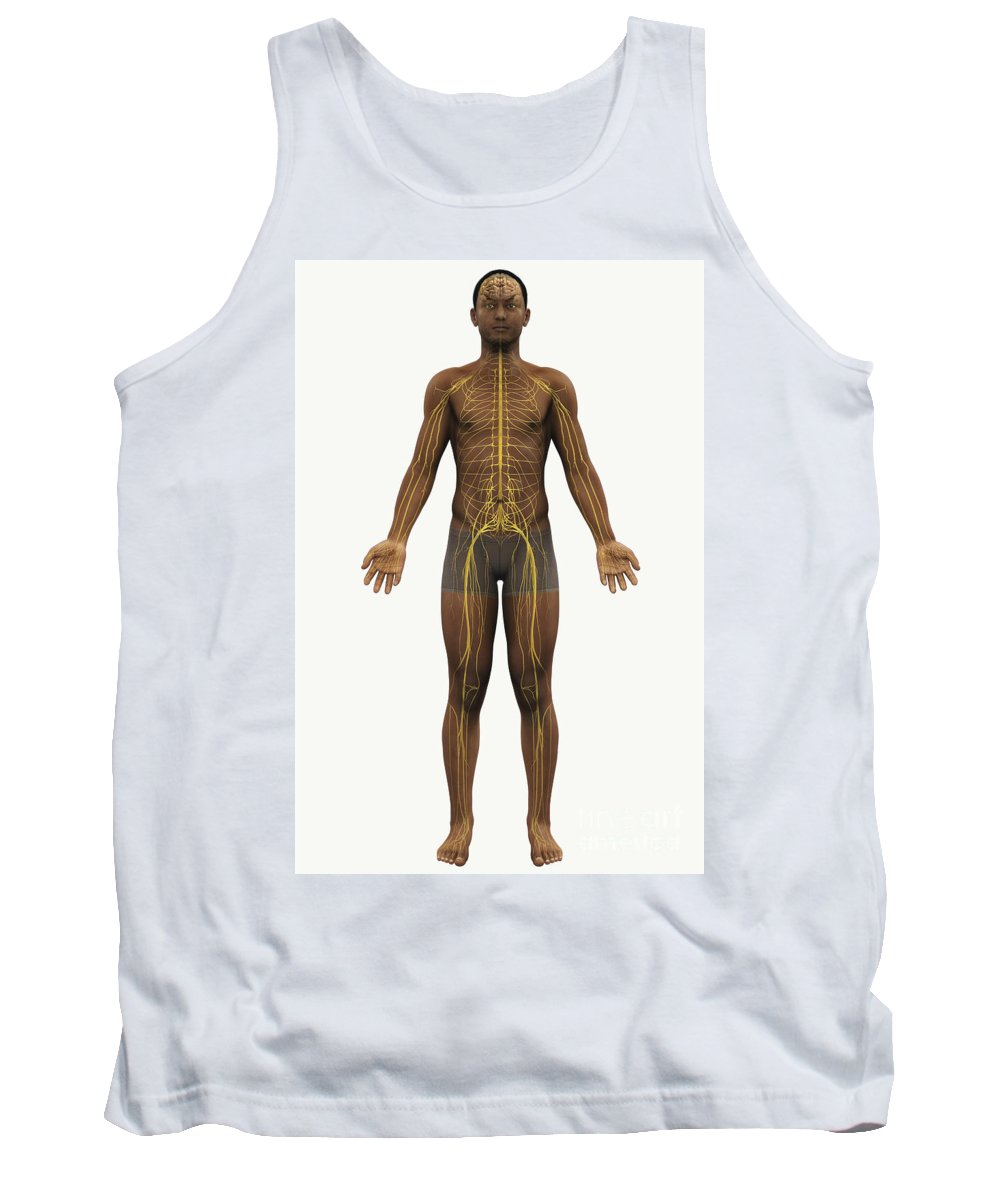 Transparent Tank Top featuring the photograph The Nerves Of The Body by Science Picture Co
