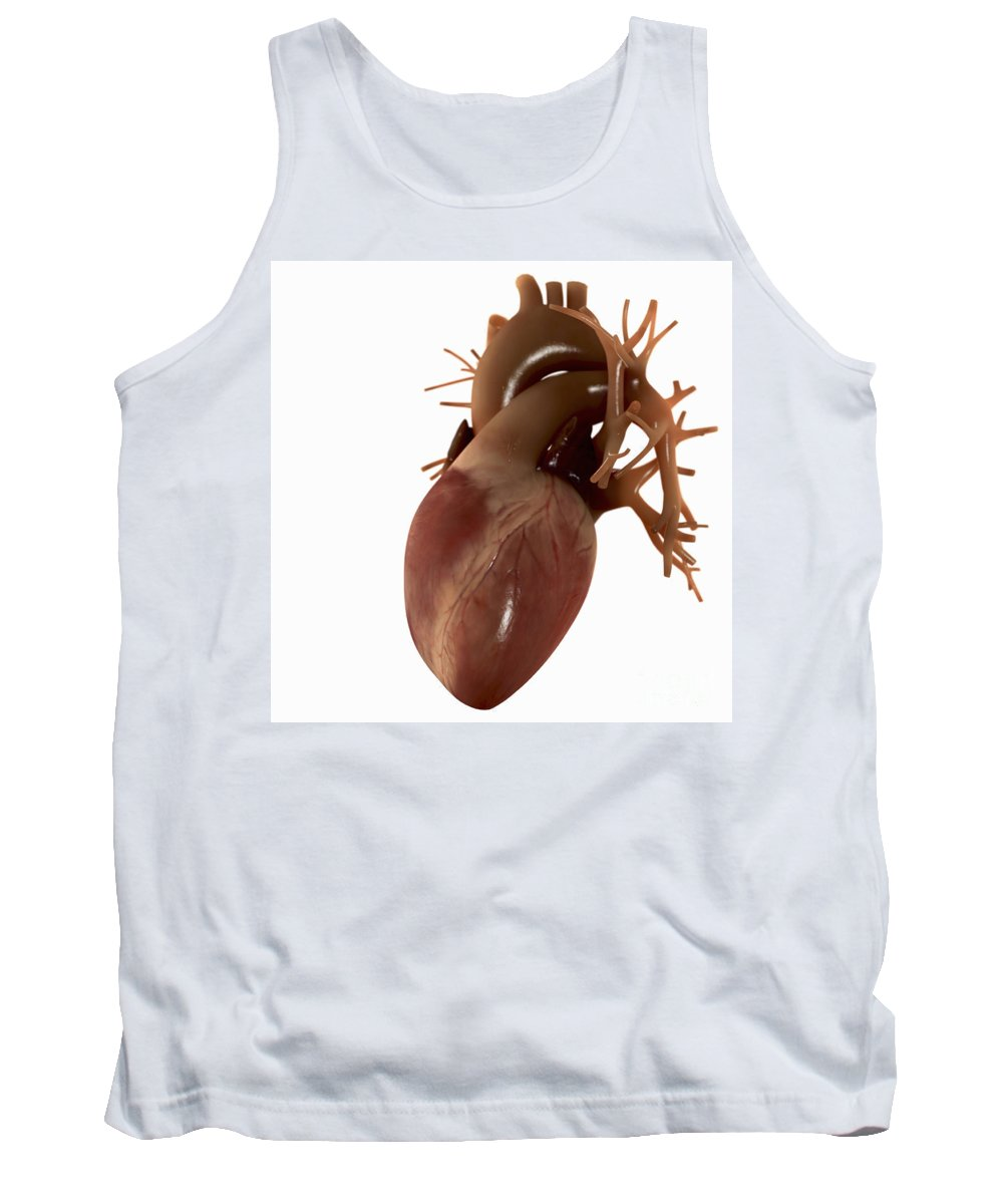 Human Anatomy Tank Top featuring the photograph Heart Anatomy by Science Picture Co