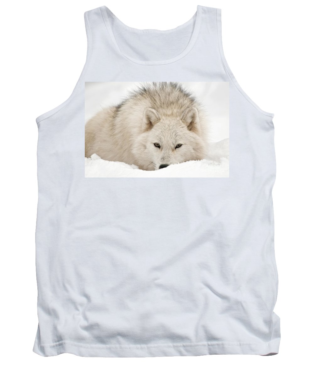 Arctic Wolf Photography Tank Top featuring the photograph Arctic Wolf by Wolves Only