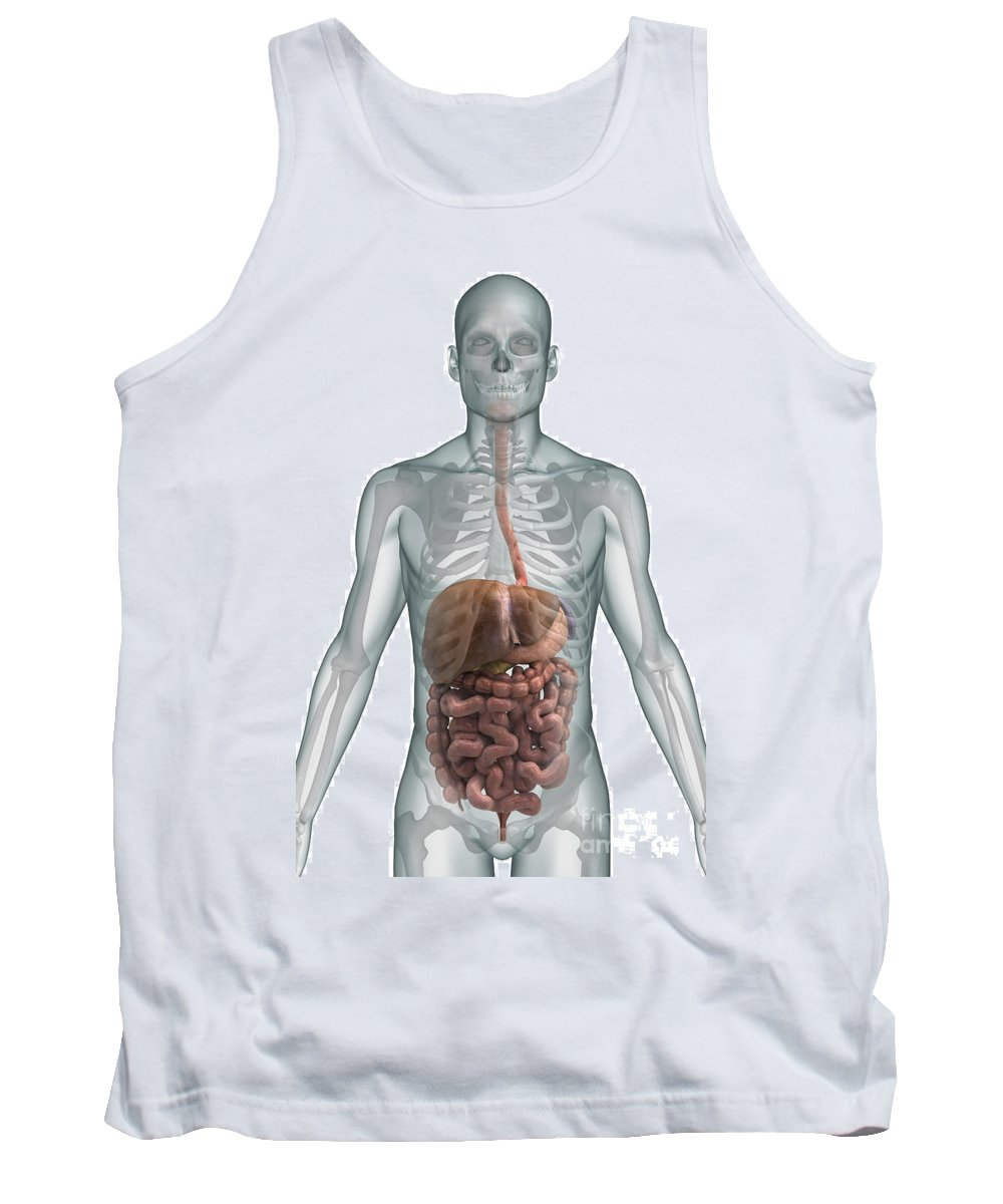 Ascending Colon Tank Top featuring the photograph The Digestive System by Science Picture Co