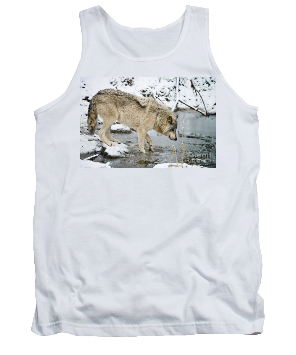 Timber Wolf Photography Tank Top featuring the photograph Timber Wolf by Michael Cummings