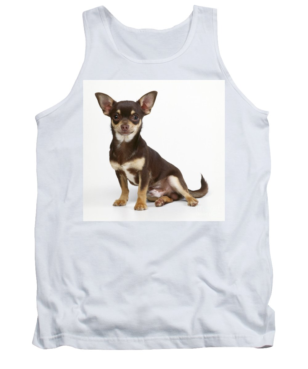Chihuahua Tank Top featuring the photograph Chihuahua Dog by John Daniels
