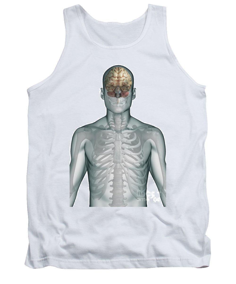 Human Tank Top featuring the photograph Human Brain by Science Picture Co