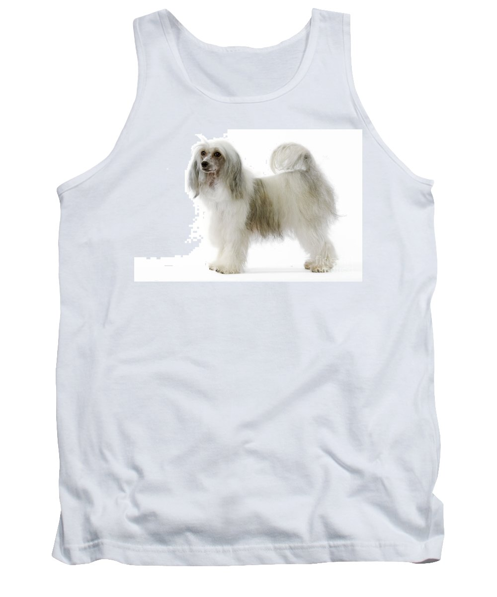 Chinese Crested Tank Top featuring the photograph Chinese Crested Dog by Jean-Michel Labat
