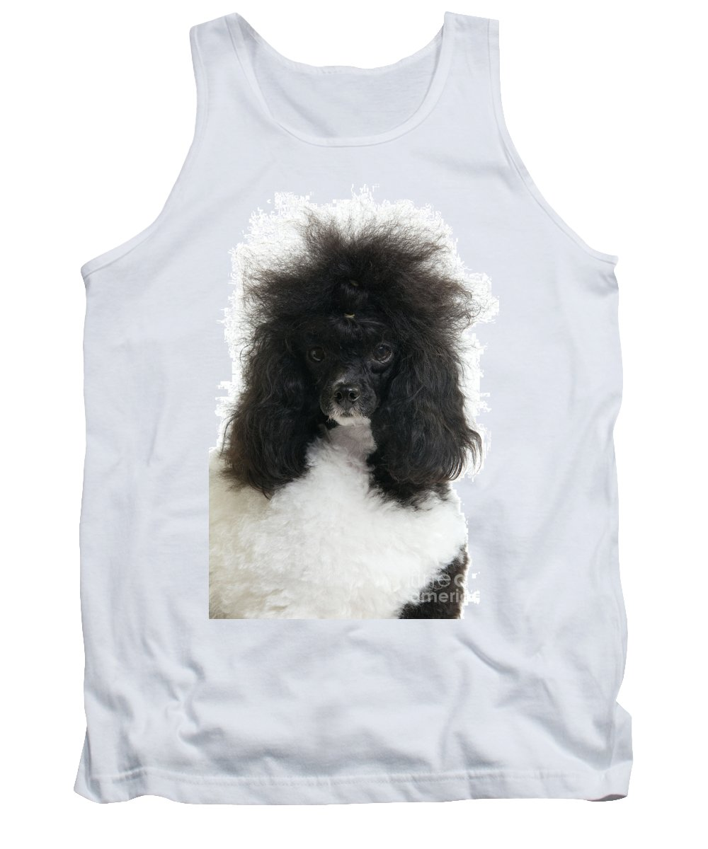 Poodle Tank Top featuring the photograph Black And White Poodle by Jean-Michel Labat