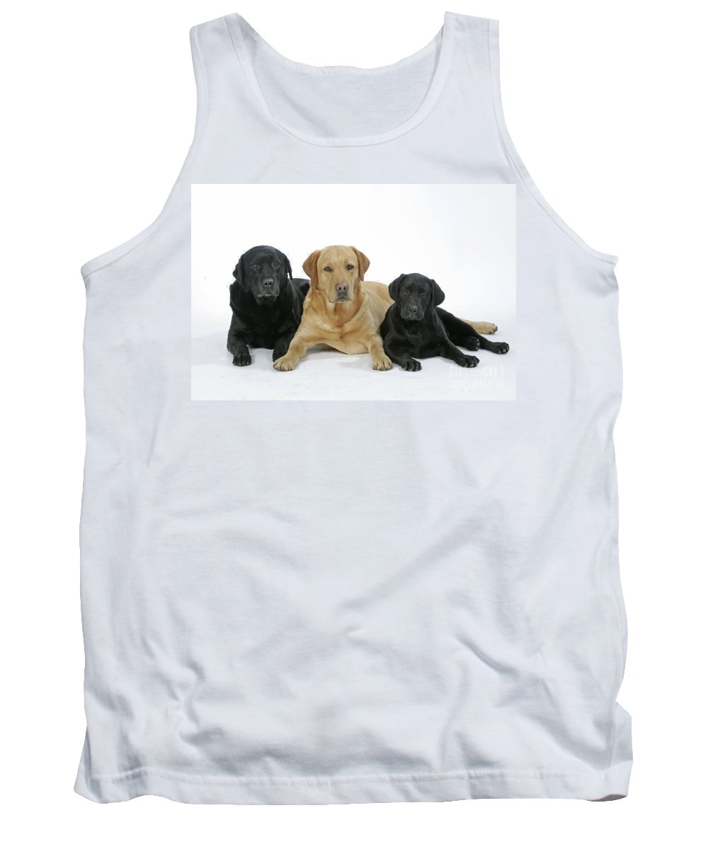 Dogs Tank Top featuring the photograph Black And Yellow Labradors With Puppy by John Daniels