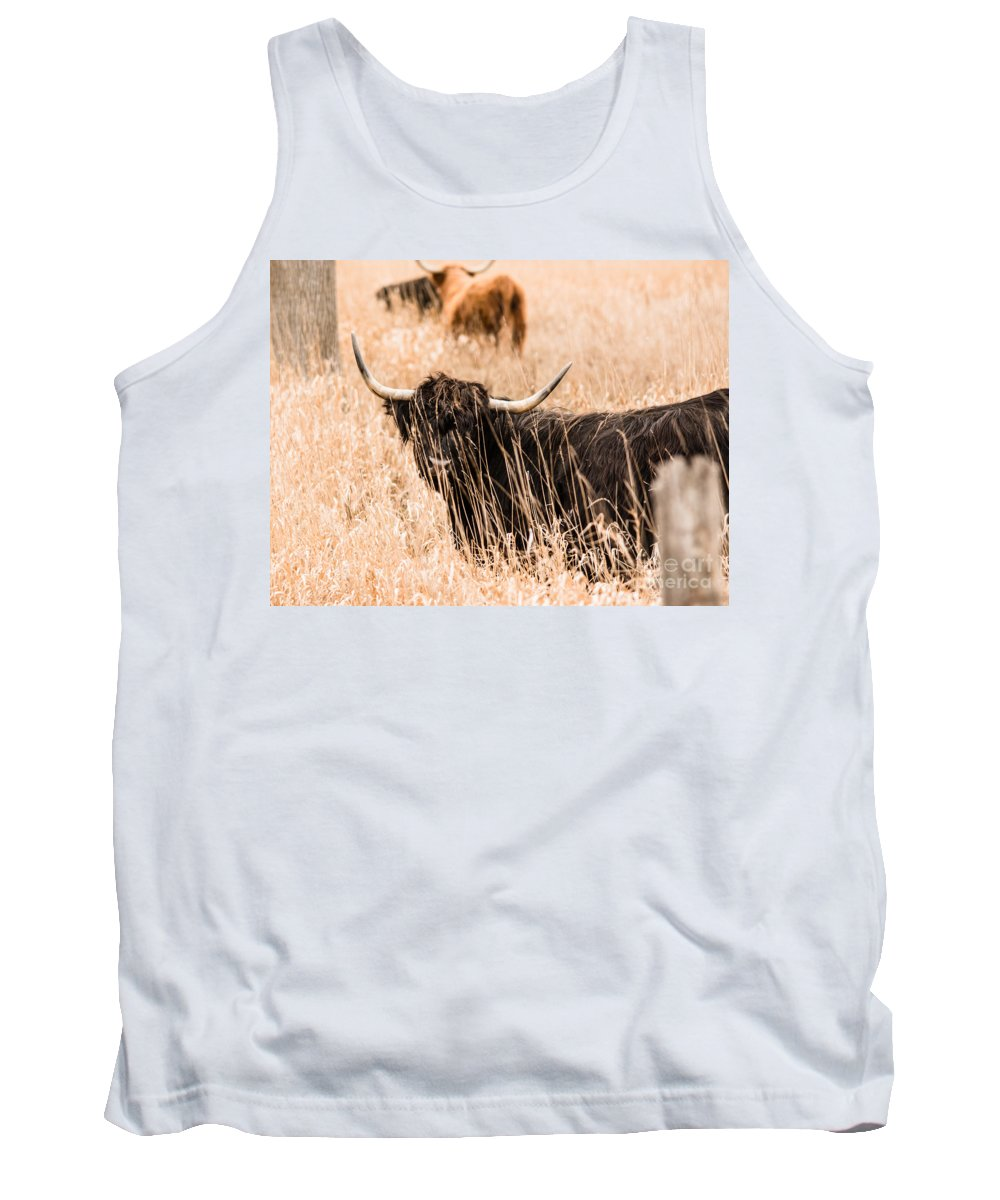 Tank Top featuring the photograph Black Highland Cow by Cheryl Baxter