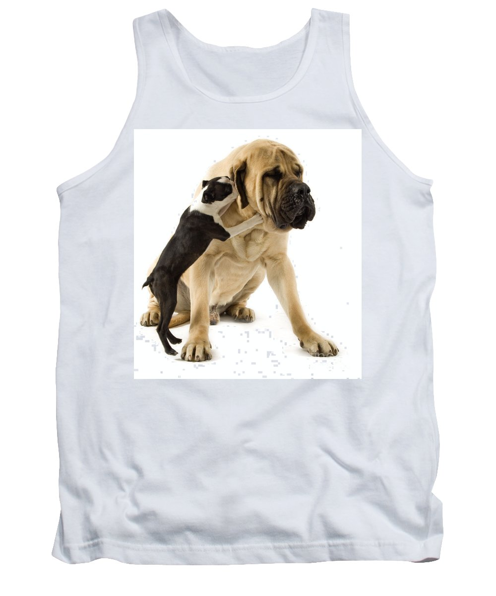 Boston Terrier Tank Top featuring the photograph Boston Terrier And Mastiff by Jean-Michel Labat