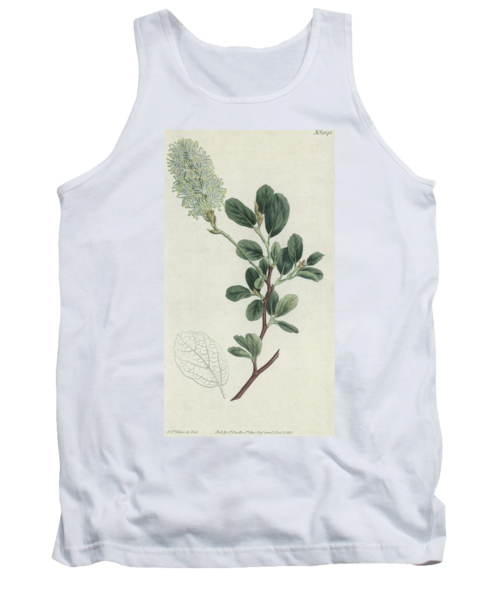 Botany Tank Top featuring the painting Botanical Engraving by Sydenham Teast Edwards