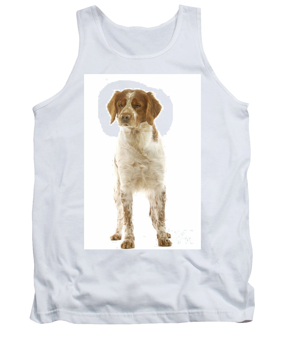 Brittany Spaniel Tank Top featuring the photograph Brittany Spaniel by Jean-Michel Labat
