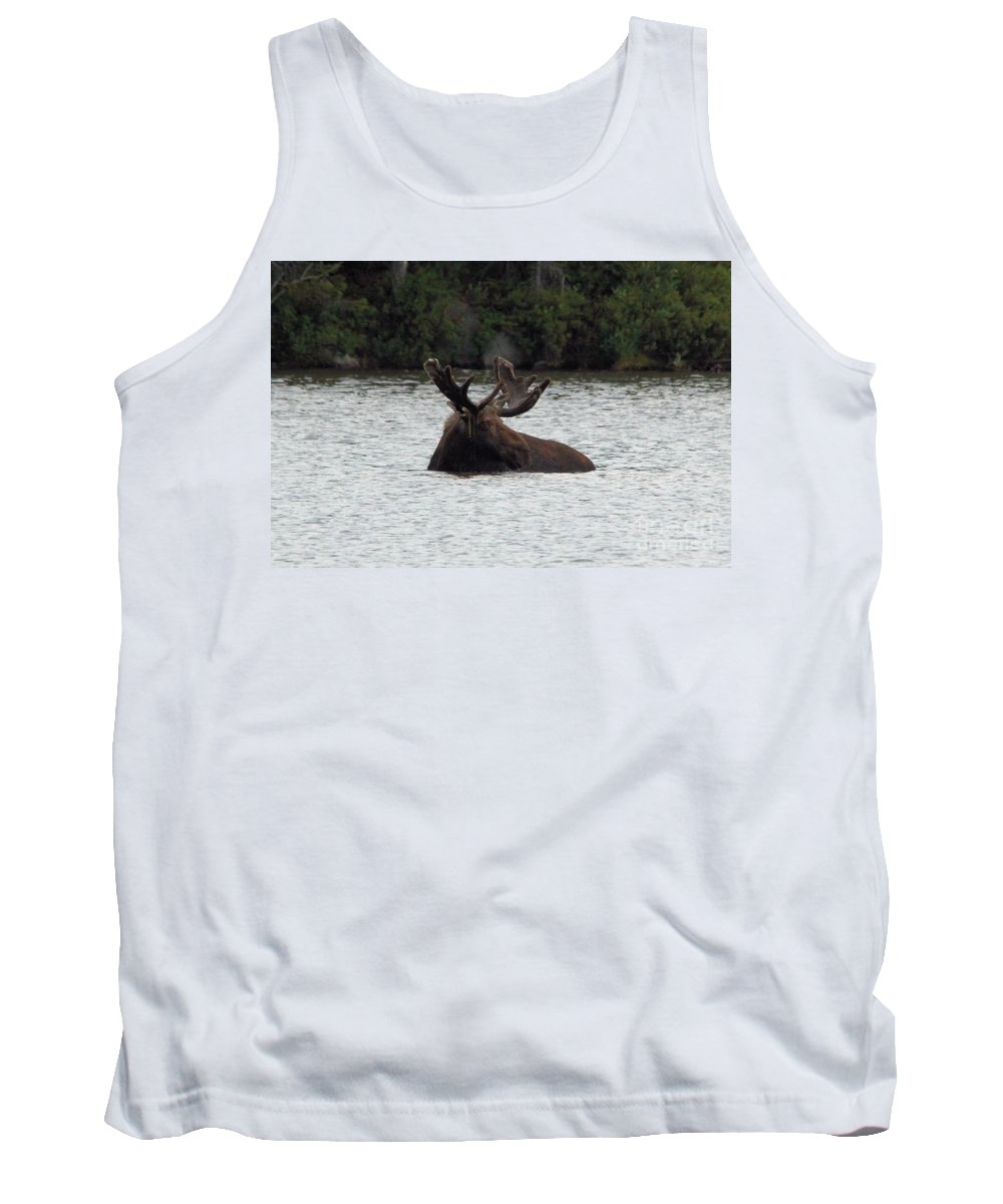 Maine Moose Tank Top featuring the photograph Bull Moose - 3587 by Joseph Marquis