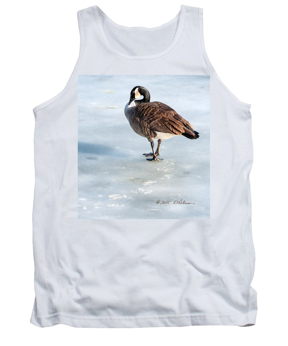 Winter Scene Tank Top featuring the photograph Canada Goose Web Prints by Edward Peterson