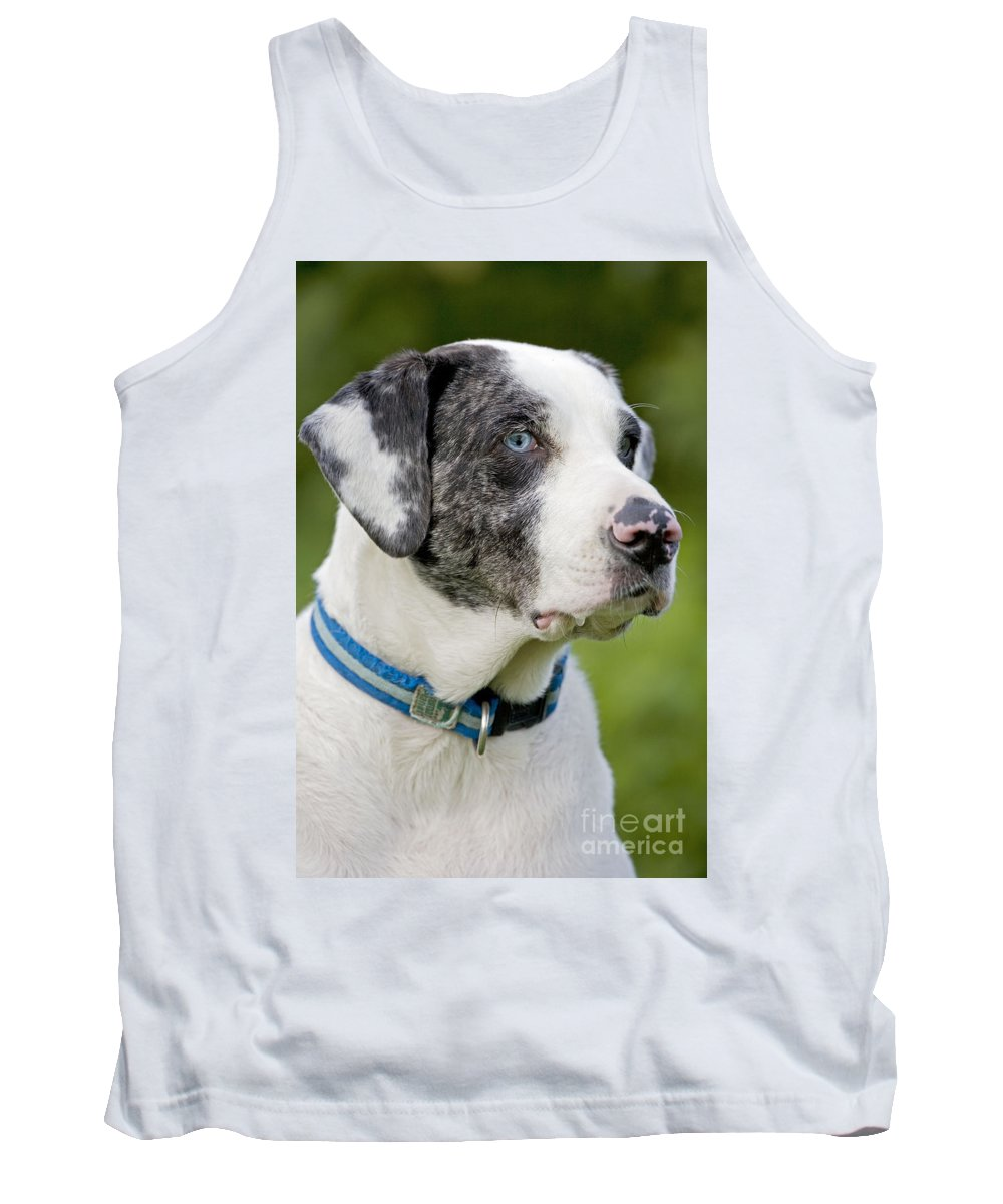 Catahoula Leopard Dog Tank Top featuring the photograph Catahoula Leopard Dog by John Cancalosi