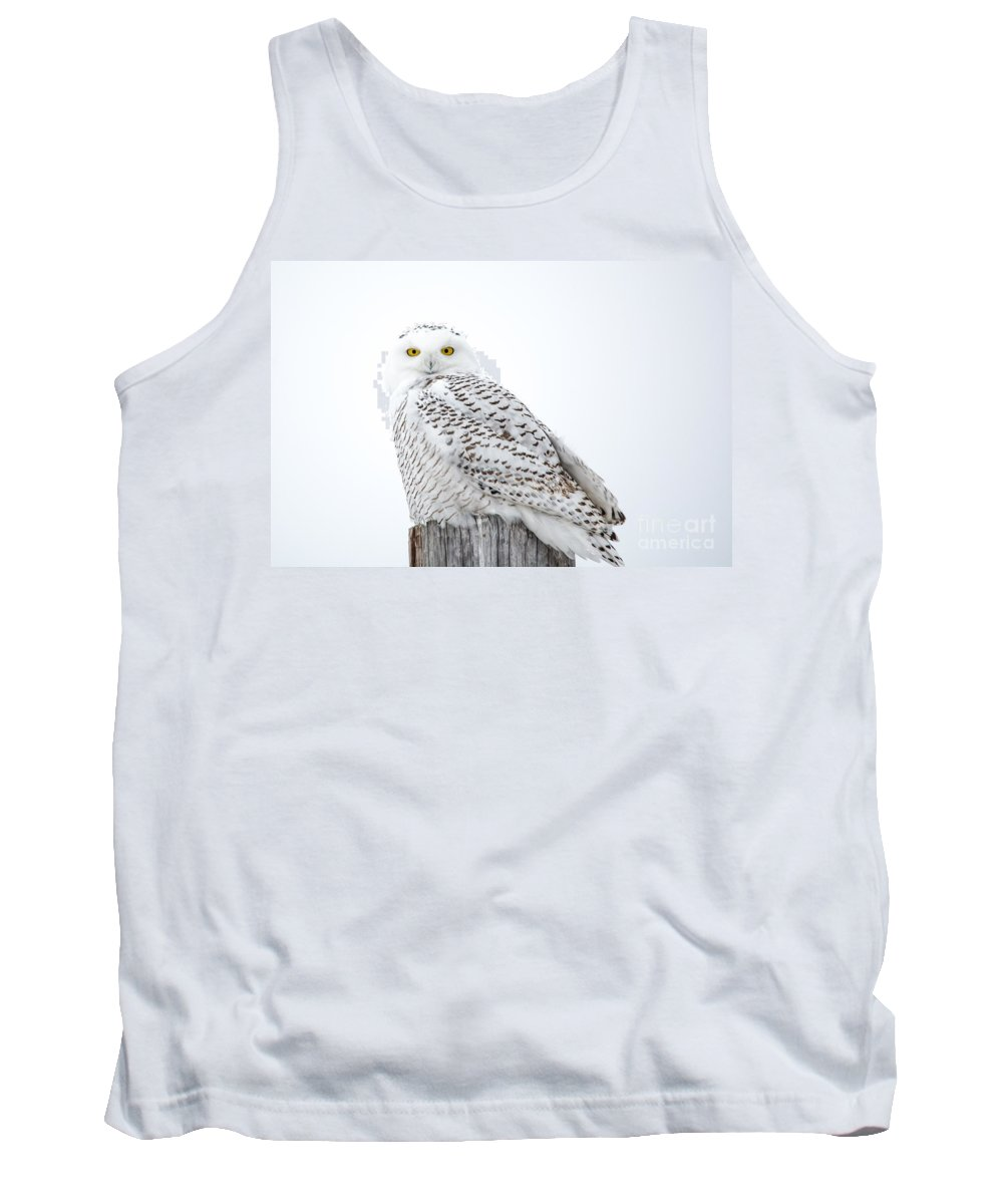 Field Tank Top featuring the photograph Centered Snowy Owl by Cheryl Baxter