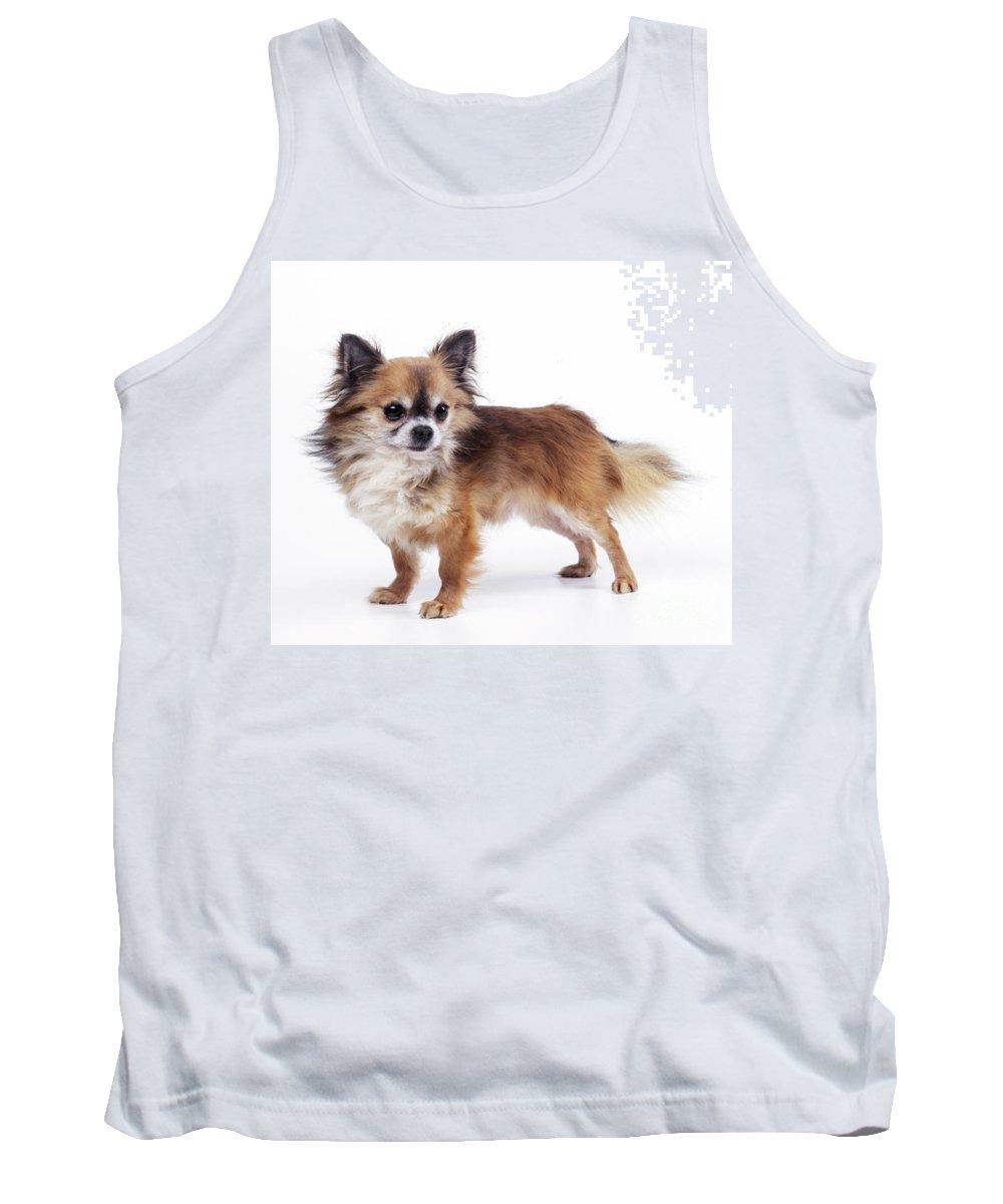 Chihuahua Tank Top featuring the photograph Chihuahua Dog by John Daniels