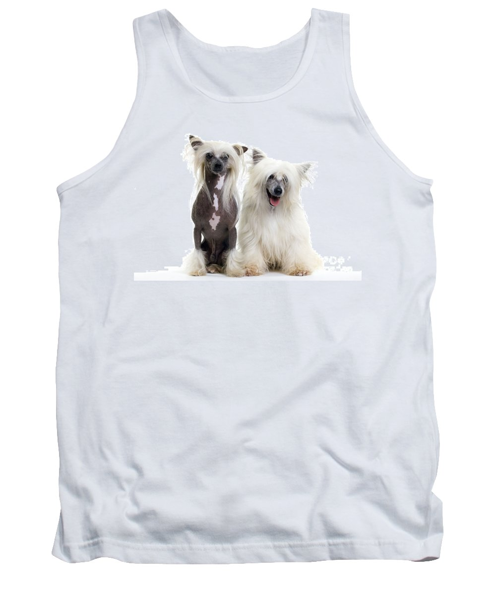 Chinese Crested Tank Top featuring the photograph Chinese Crested Dogs by Jean-Michel Labat