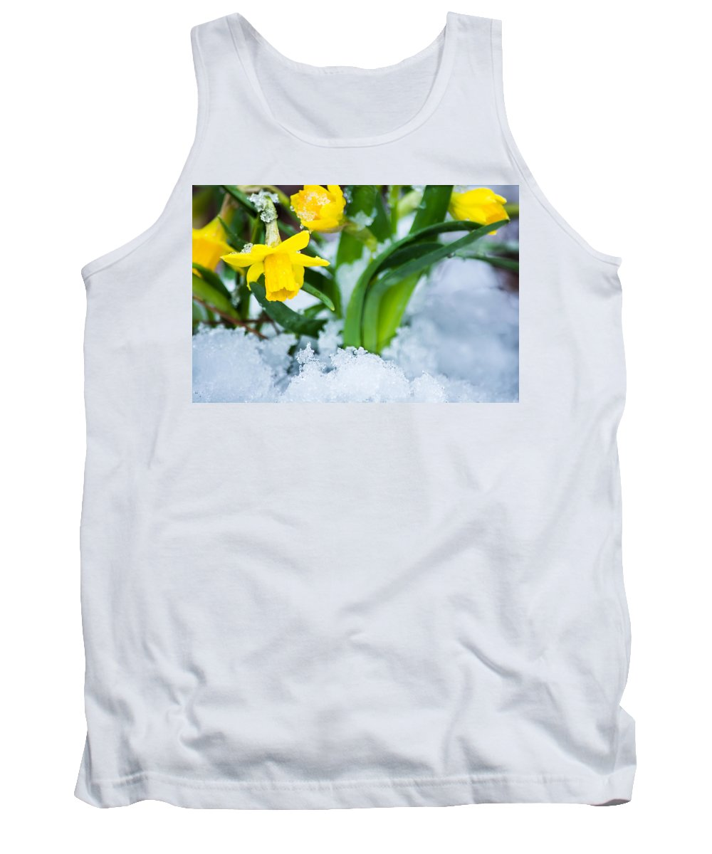 Spring Tank Top featuring the photograph Daffodils In The Snow by Parker Cunningham