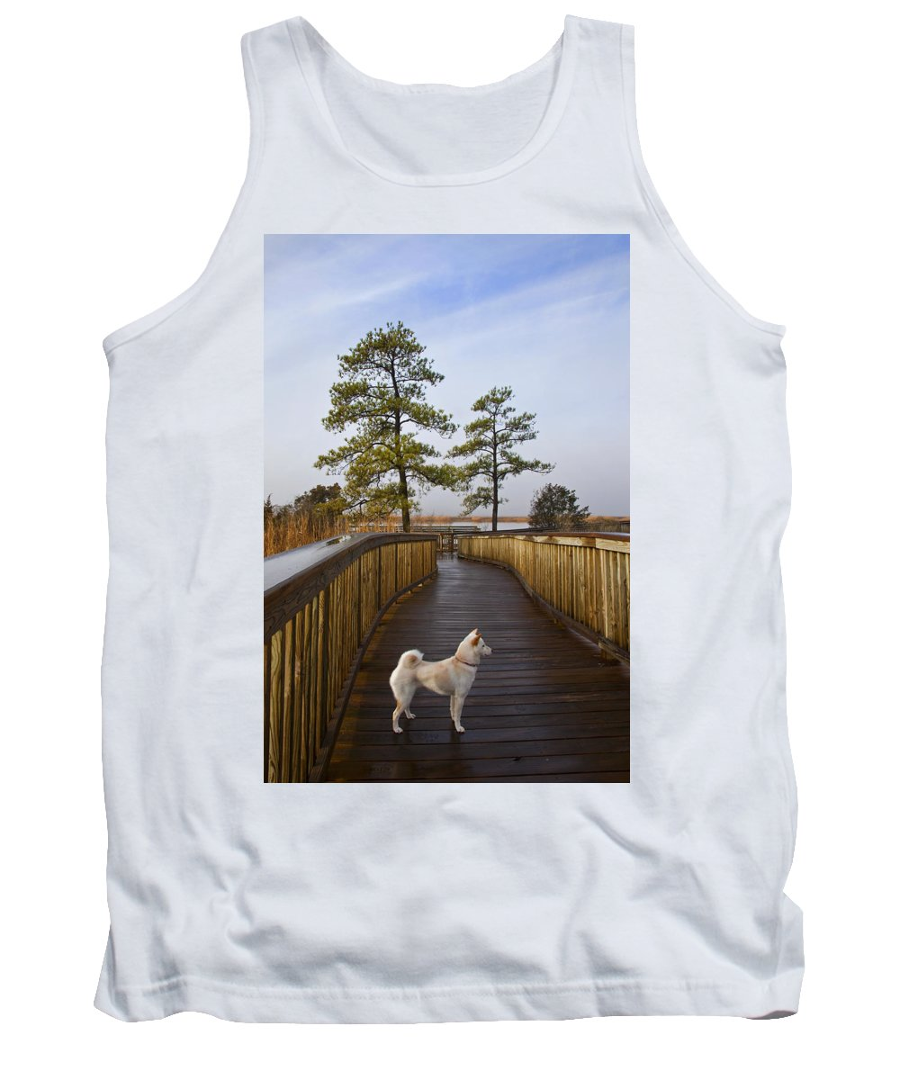 Dog Tank Top featuring the photograph Shiba Inu On Path by Amy Jackson