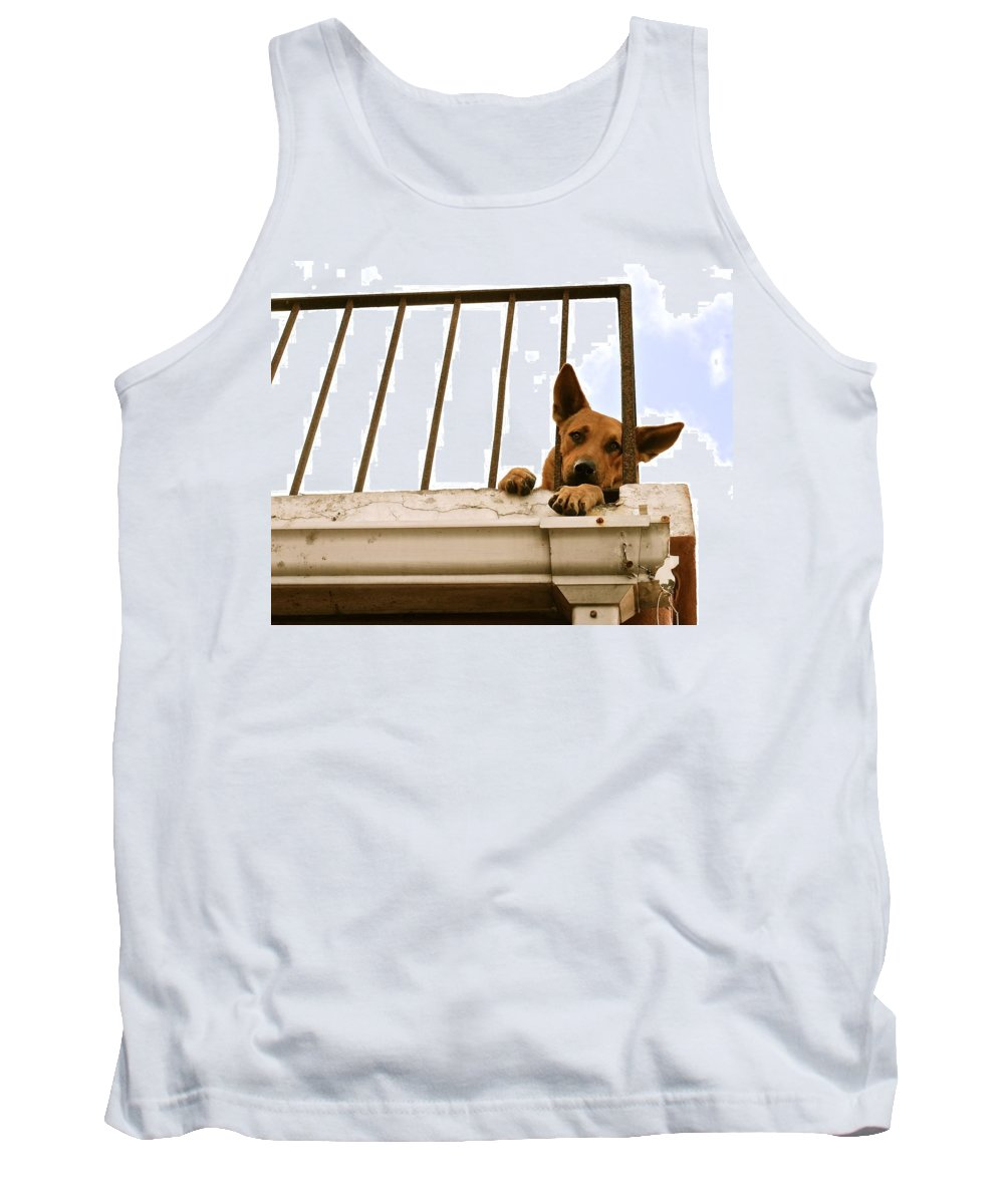 Beautiful Tank Top featuring the photograph Doggie Down Time by David Coleman
