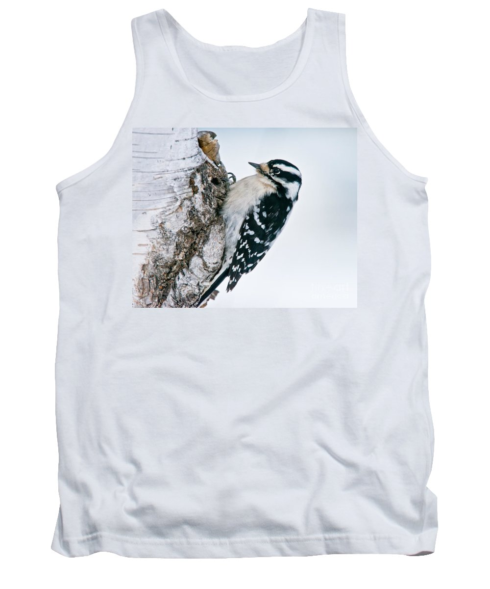 Downy Woodpecker Tank Top featuring the photograph Downy Woodpecker Pictures 27 by World Wildlife Photography