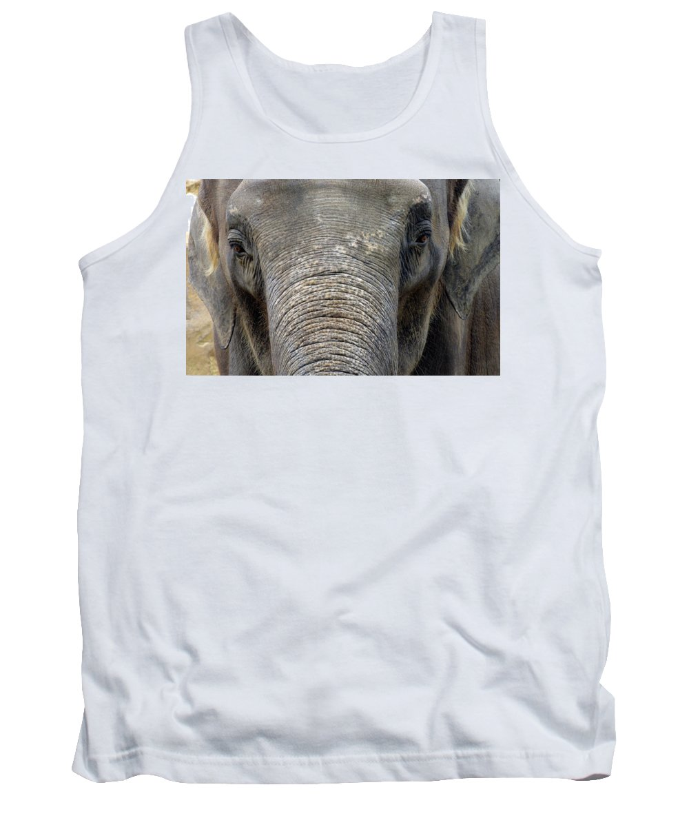 Elephant Tank Top featuring the photograph Elephant Close Up 1 by Tom Conway