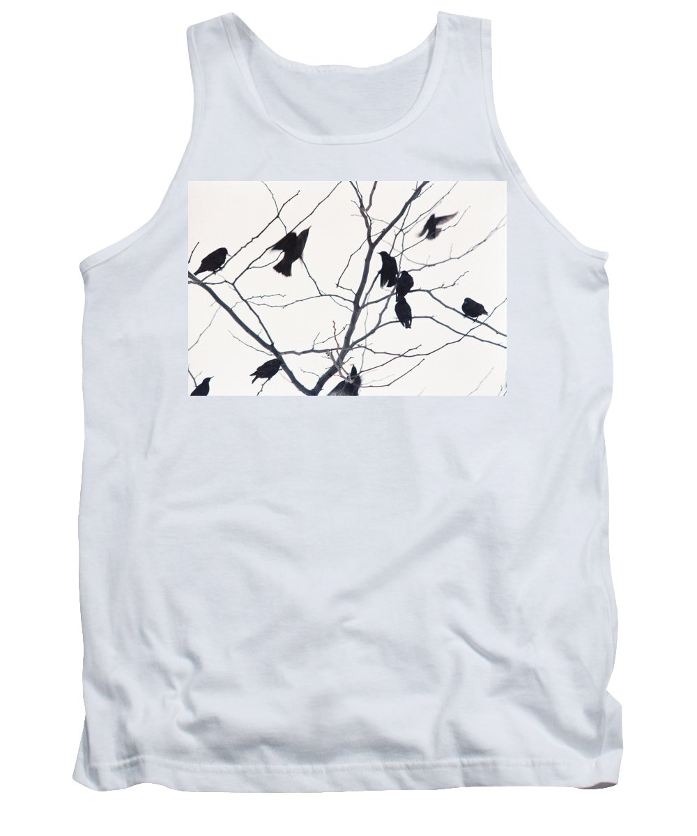 Birds Tank Top featuring the photograph Eleven Birds One Morsel by Ric Bascobert