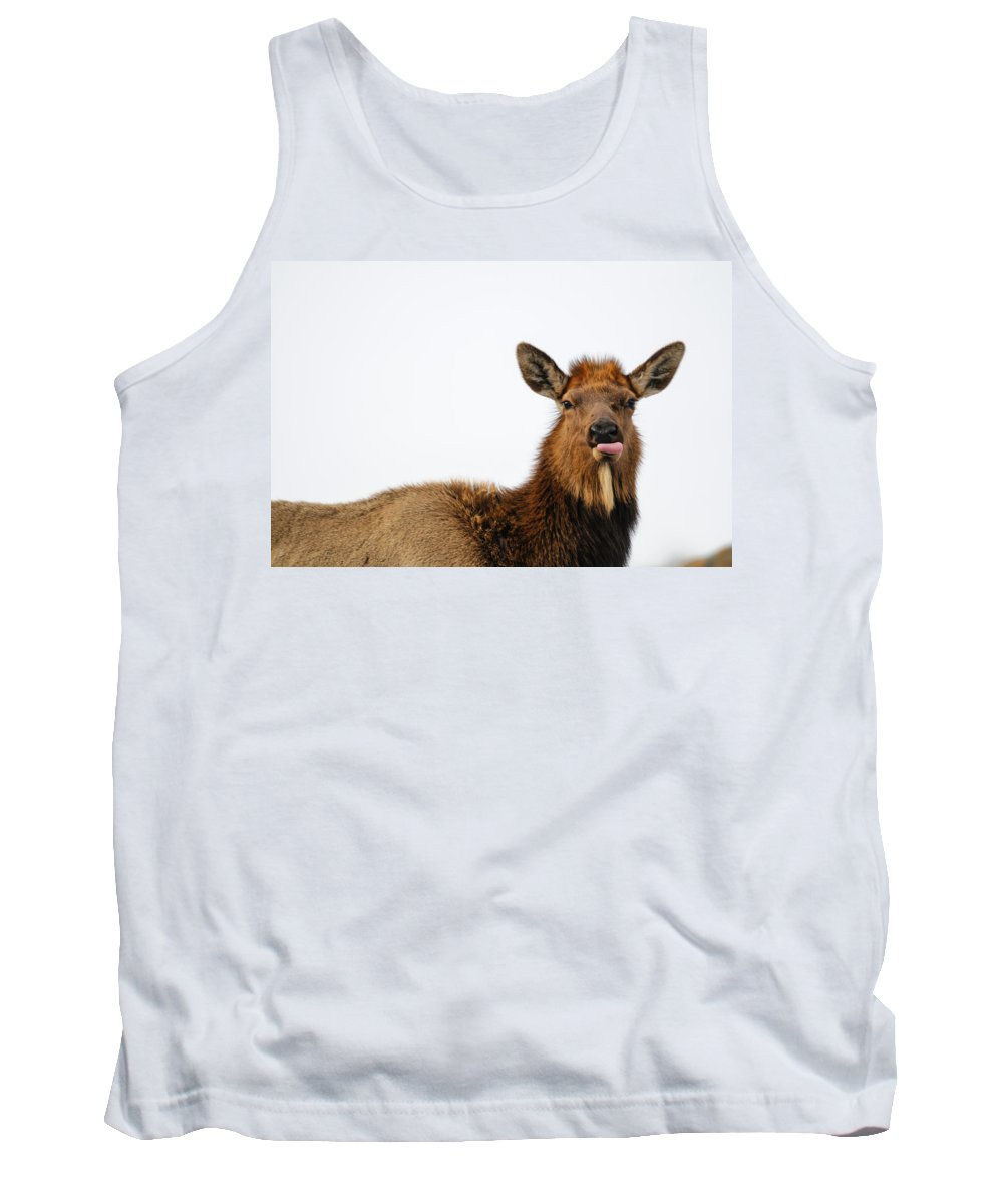 Alberta Tank Top featuring the photograph Elk by Brandon Smith