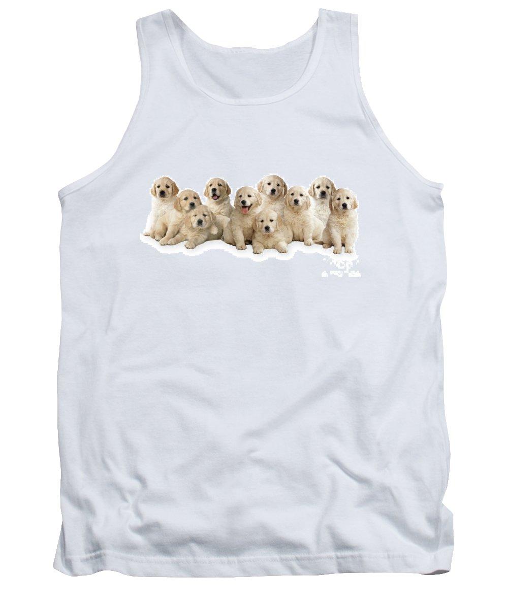 Golden Retriever Tank Top featuring the photograph Golden Retriever Puppies, In A Line by John Daniels