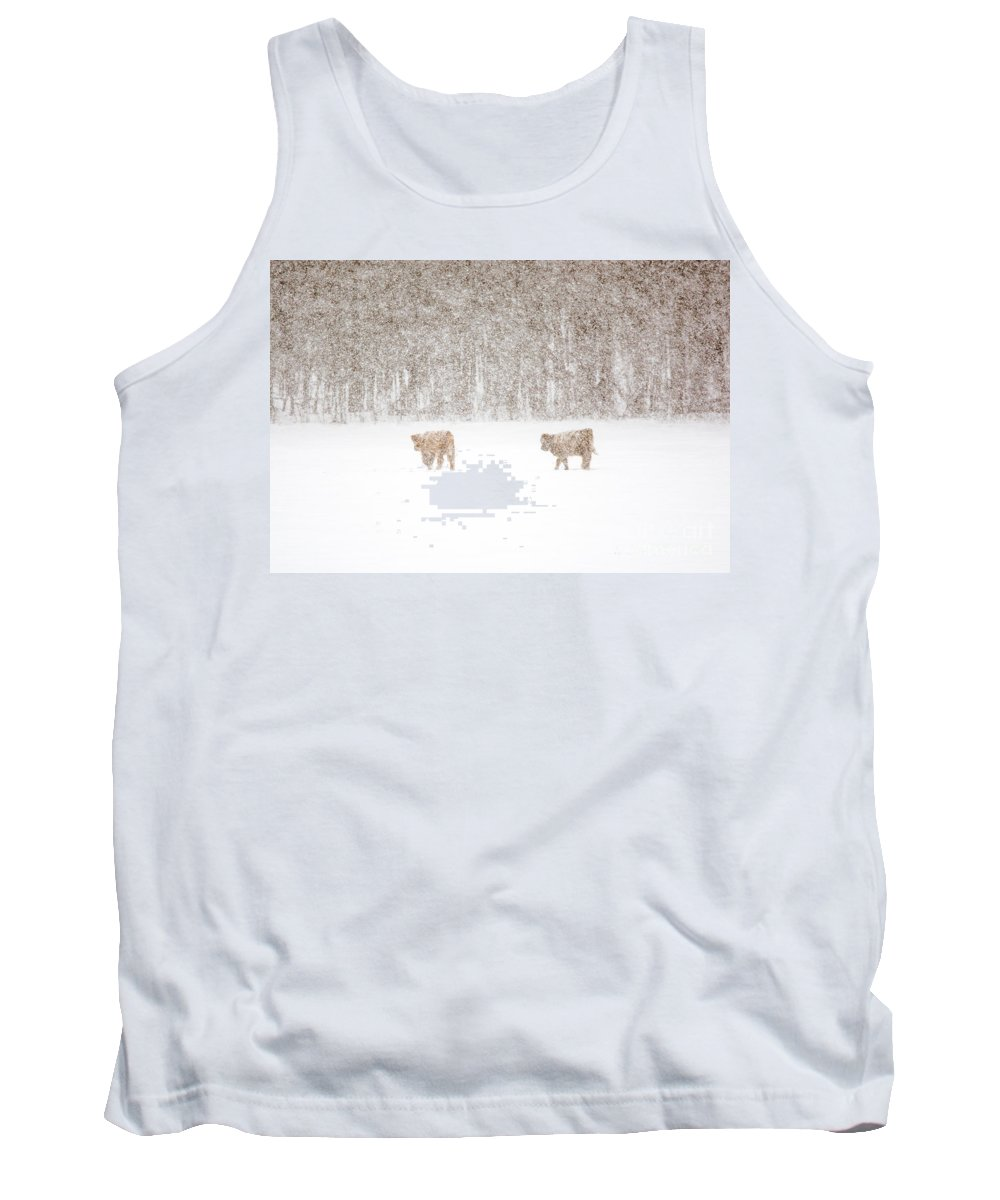 Highland Cattle Tank Top featuring the photograph Highland Cattle In The Snow by Cheryl Baxter