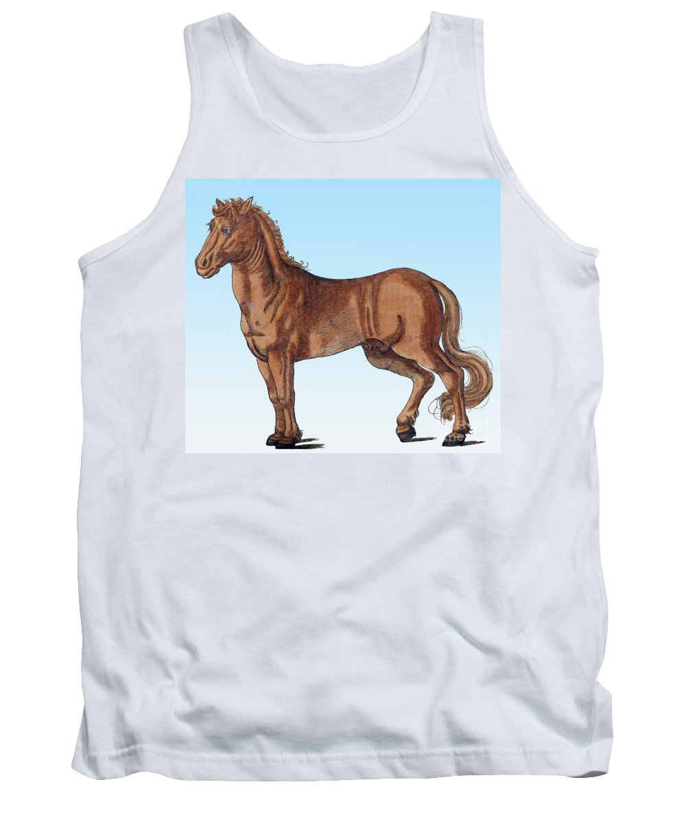 Science Tank Top featuring the photograph Horse Historiae Animalium by Science Source