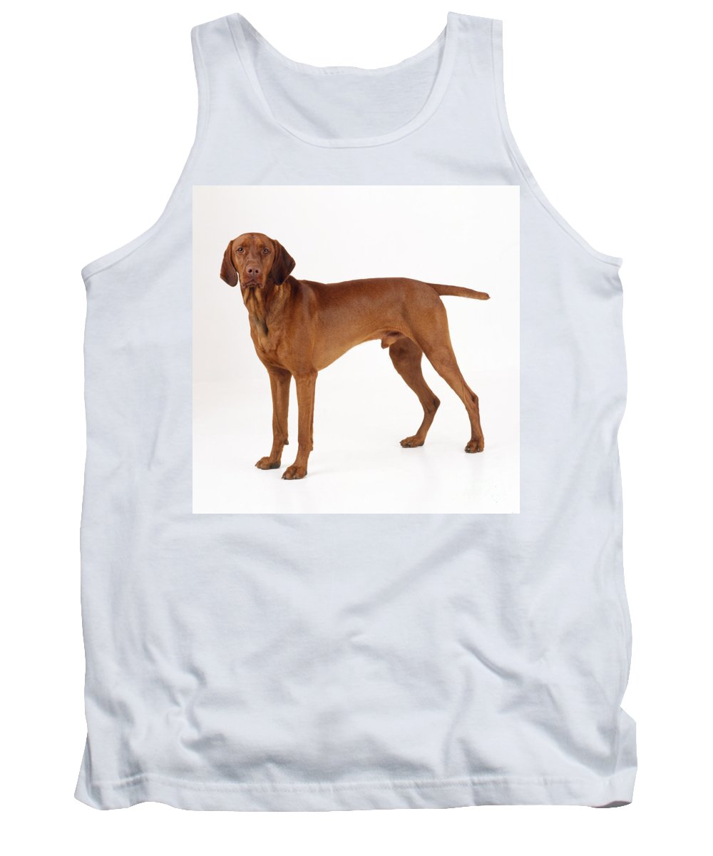 Vizsla Tank Top featuring the photograph Hungarian Vizsla Dog by John Daniels