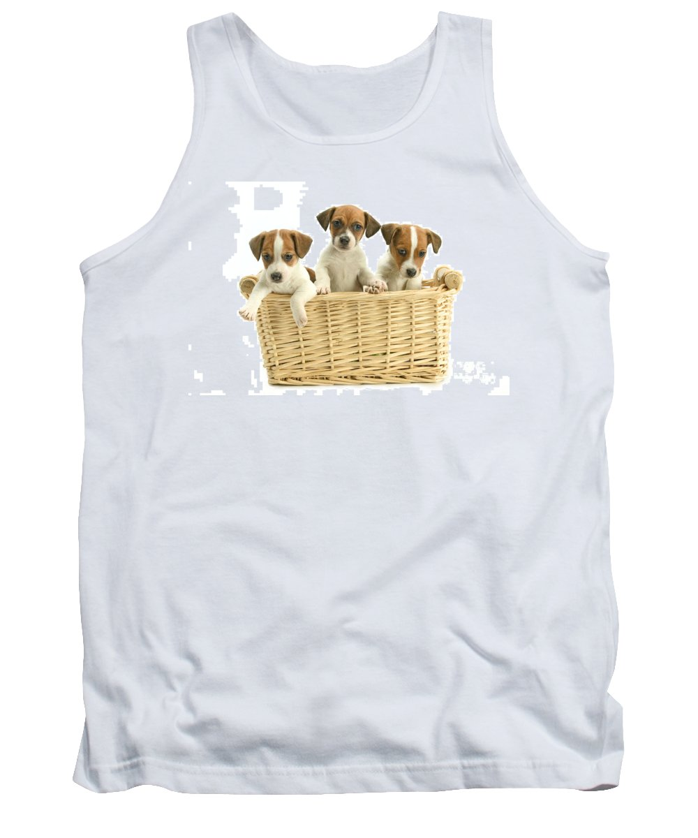 Jack Russell Terrier Tank Top featuring the photograph Jack Russell Terrier Puppies by Jean-Michel Labat