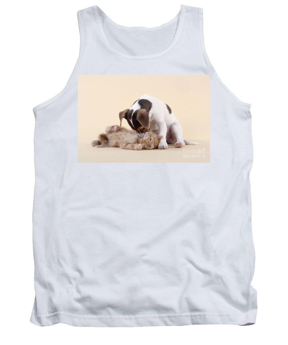 Kitten Tank Top featuring the photograph Jack Russell Terrier Puppy And Kitten by John Daniels