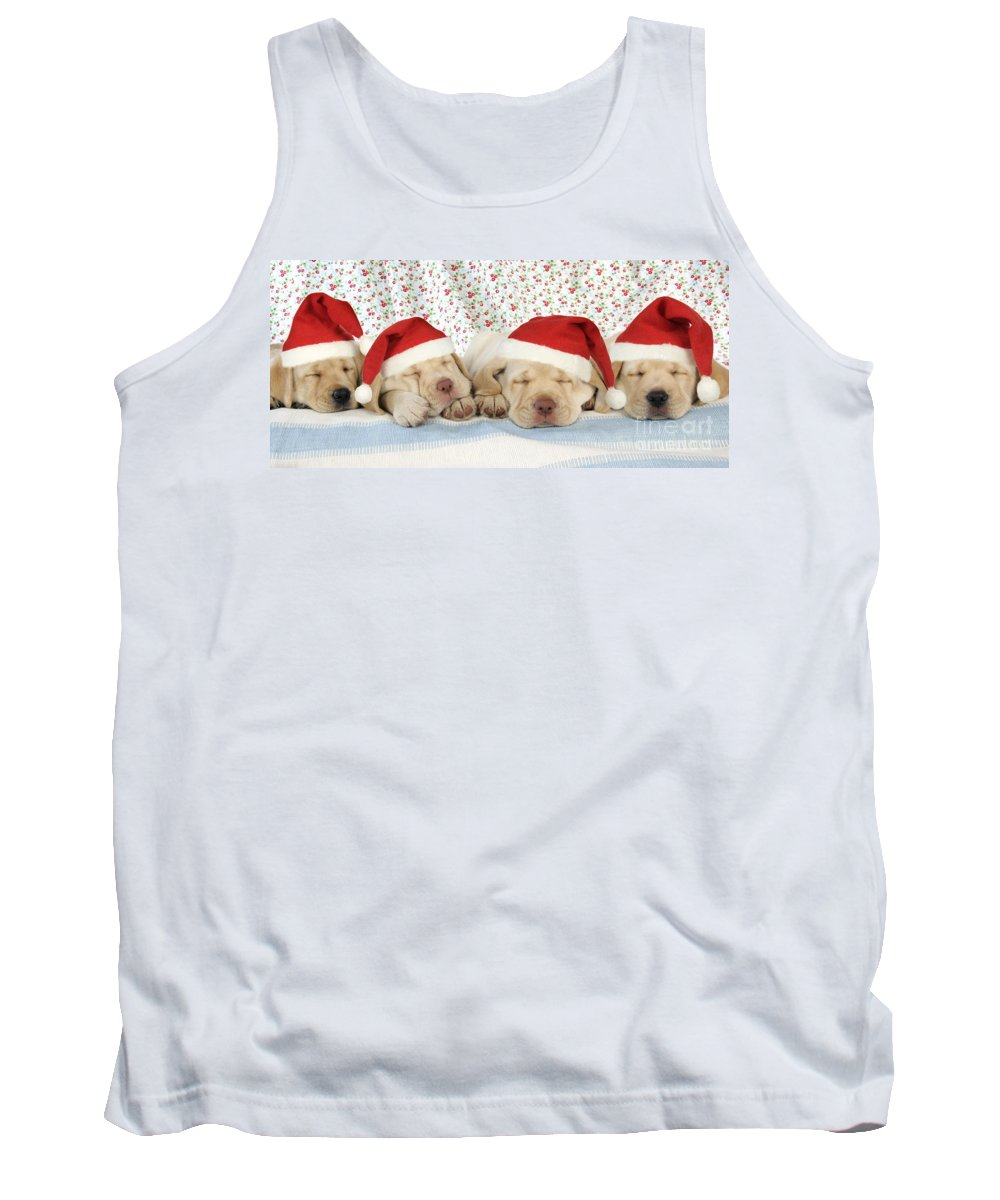 Dog Tank Top featuring the photograph Labrador Puppy Dogs Wearing Christmas by John Daniels
