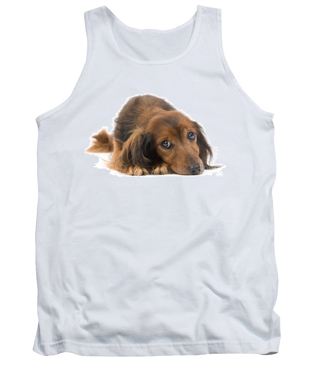 Long-haired Dachshund Tank Top featuring the photograph Long-haired Dachshund by Jean-Michel Labat