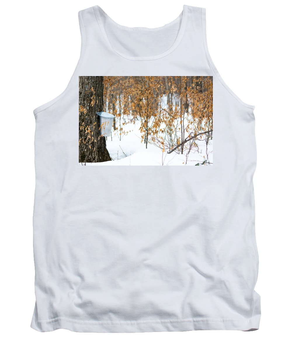Landscape Tank Top featuring the photograph Maple Woods by Cheryl Baxter