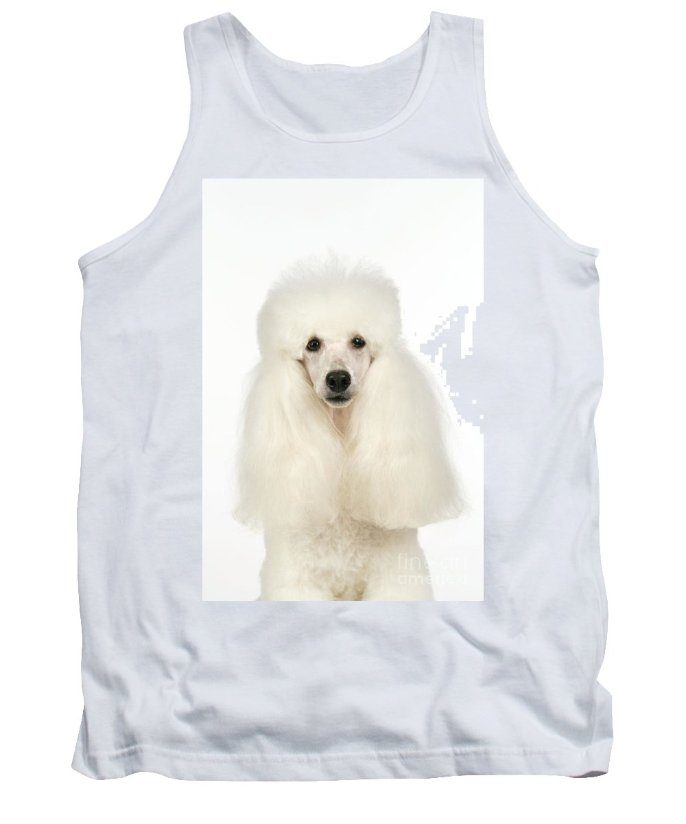 Miniature Poodle Tank Top featuring the photograph Miniature Poodle Dog by John Daniels
