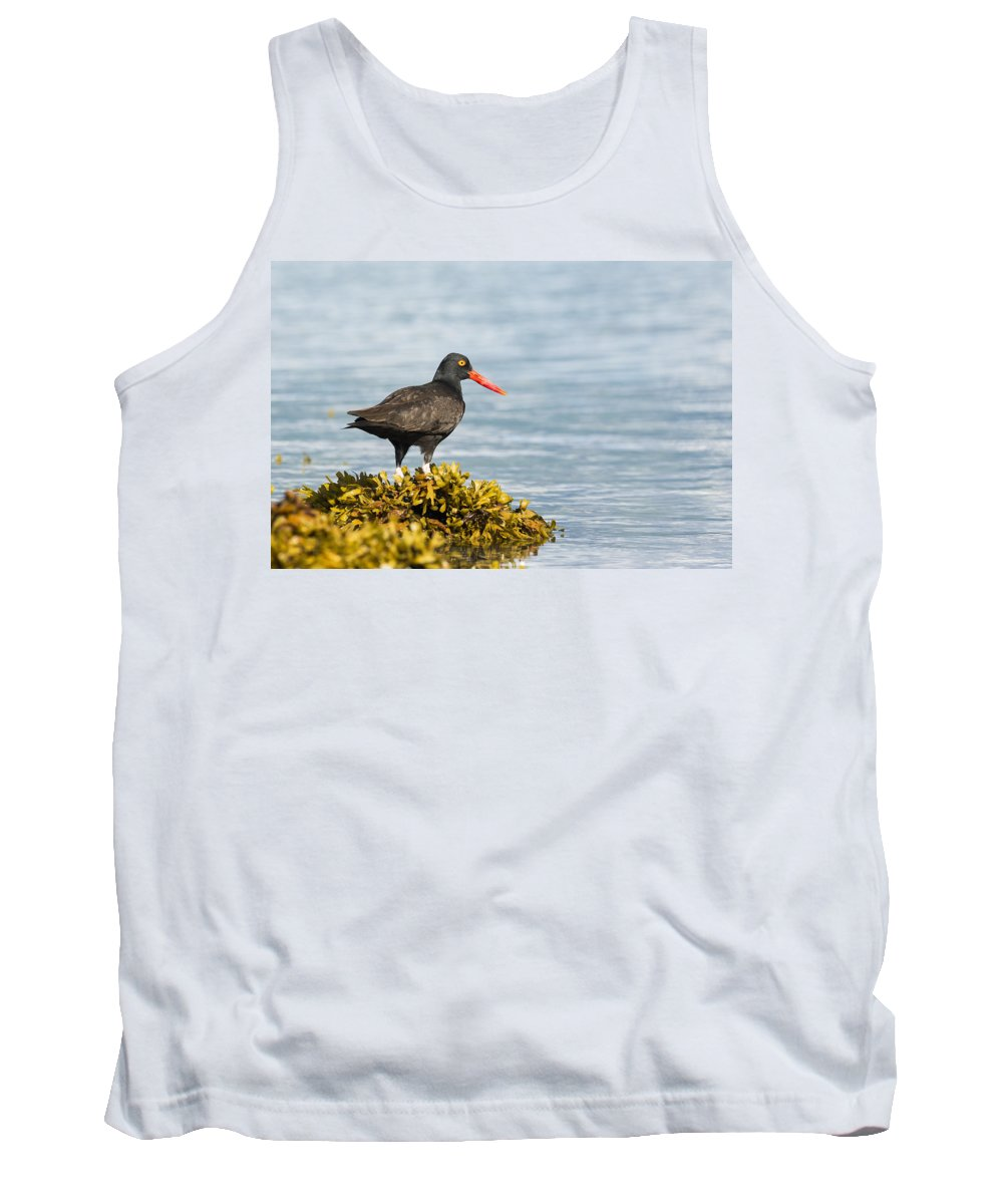 Oystercatcher Tank Top featuring the photograph No Bird Is An Island by Ted Raynor