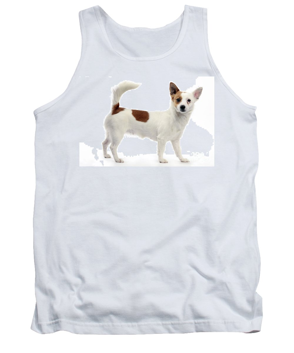Podengo Tank Top featuring the photograph Podengo Portuguese Dog by Jean-Michel Labat