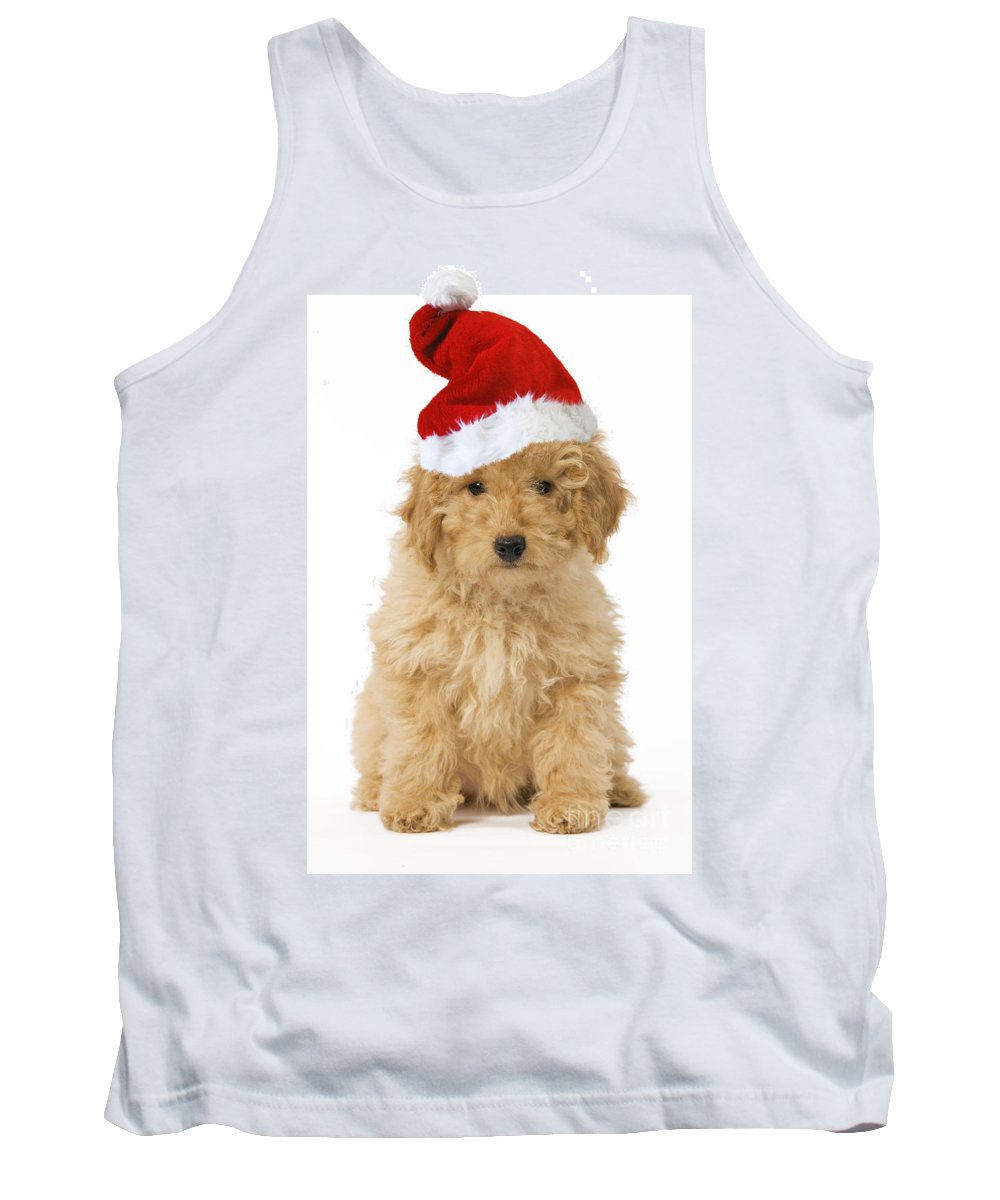 Poodle Tank Top featuring the photograph Poodle In Christmas Hat by Jean-Michel Labat