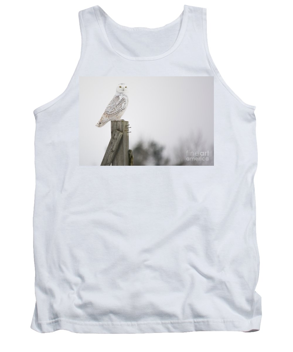 Field Tank Top featuring the photograph Proud Snowy Owl by Cheryl Baxter