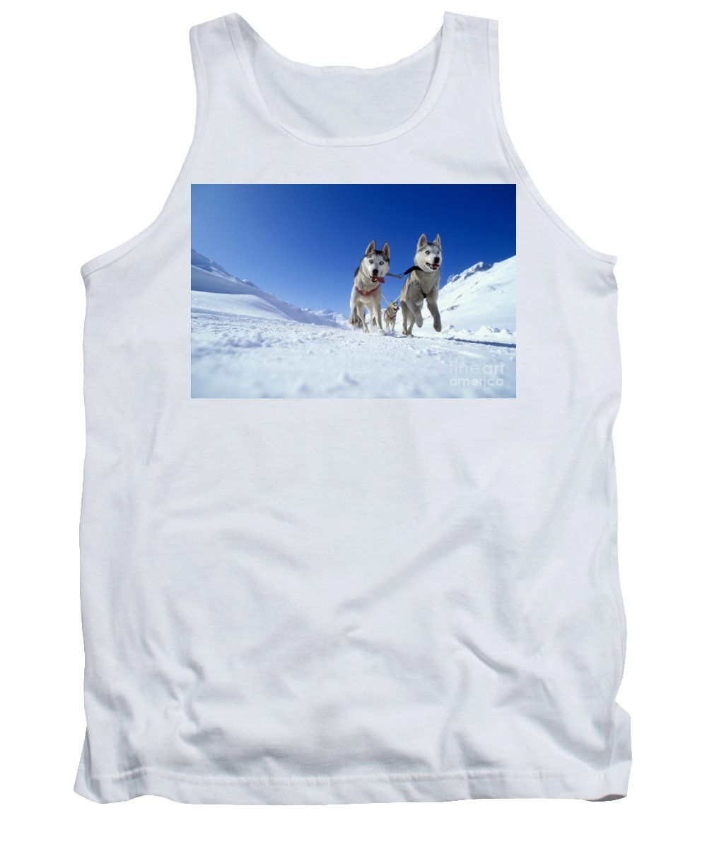 Dog Tank Top featuring the photograph Siberian Husky Dogs by Rolf Kopfle