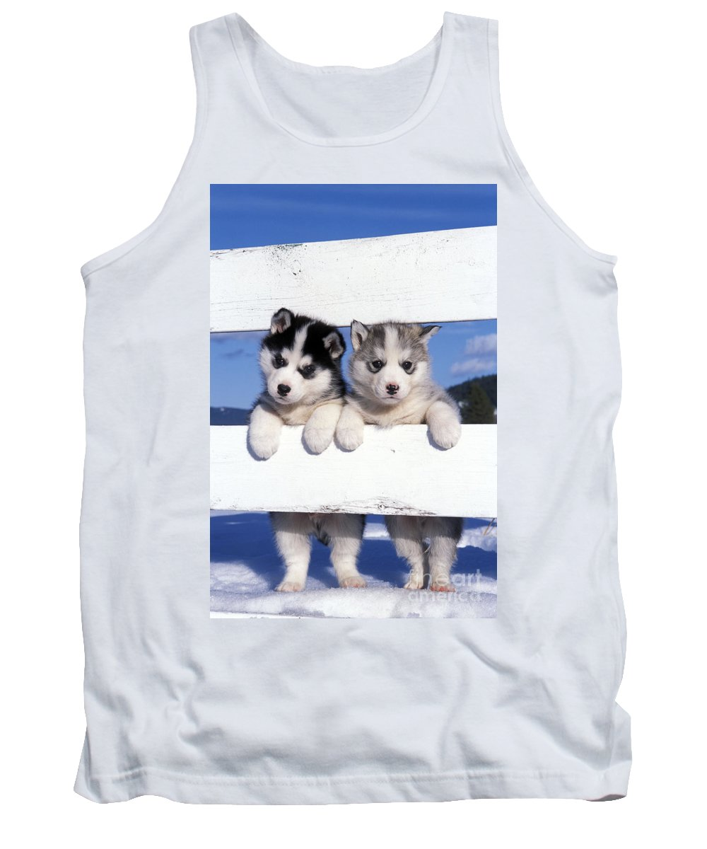 Siberian Huskies Tank Top featuring the photograph Siberian Husky Puppies by Rolf Kopfle