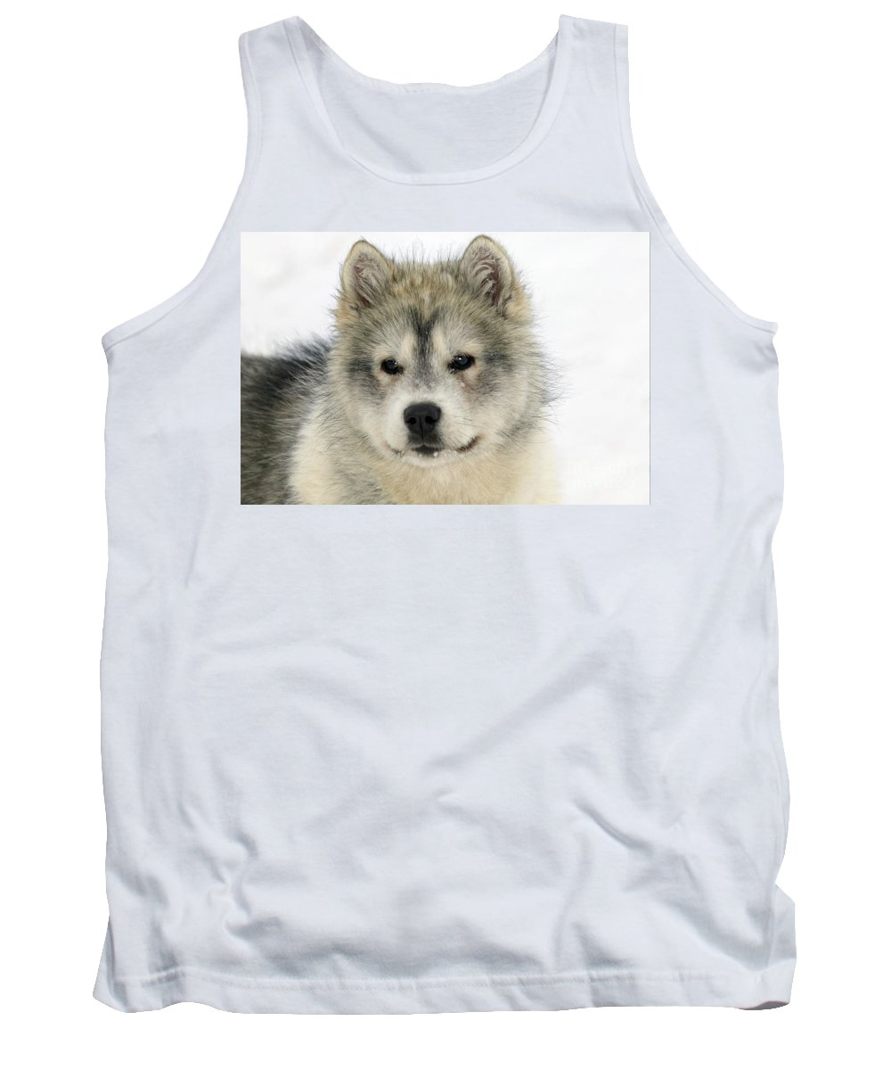 Arctic Husky Tank Top featuring the photograph Siberian Husky Puppy by M. Watson