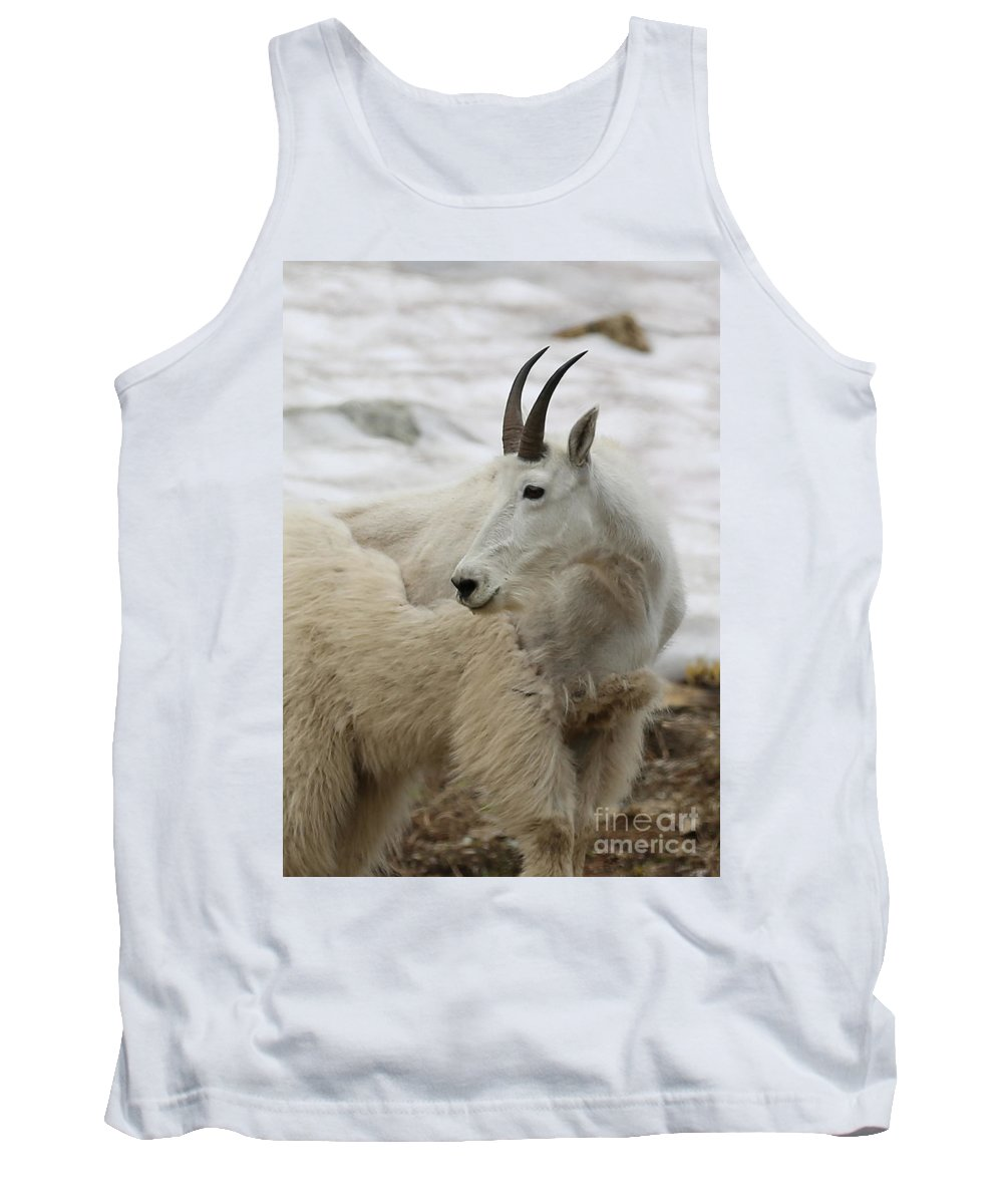 Camouflage Tank Top featuring the photograph Snow White Mountain Goat by Carol Groenen
