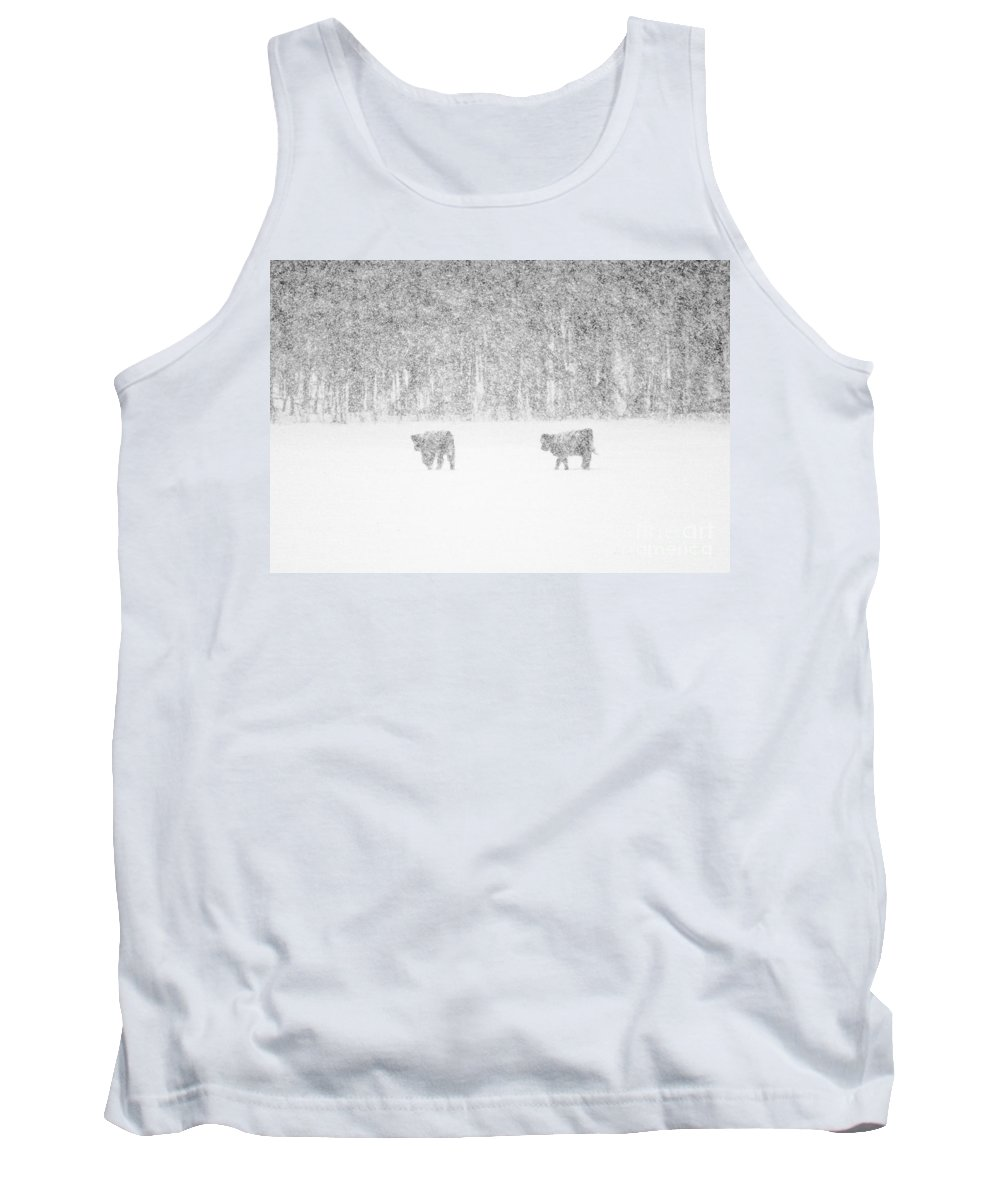 Highland Cattle Tank Top featuring the photograph Snowy Day Highland Cattle by Cheryl Baxter