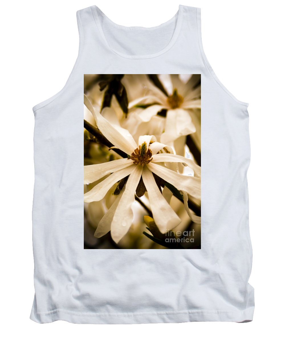 Flowers Tank Top featuring the photograph Star Magnolia by Tim Hester