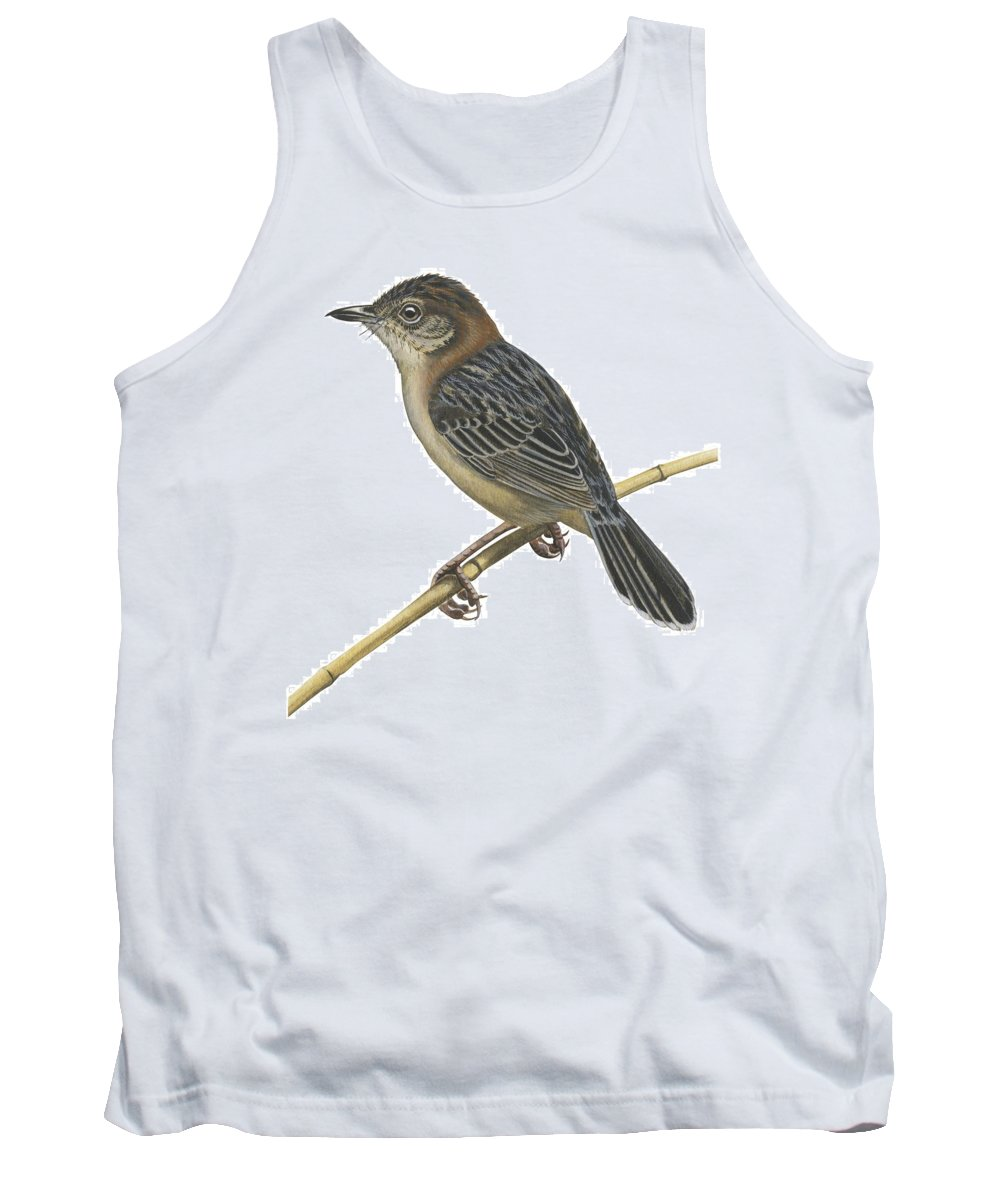 No People; Square Image; Full Length; White Background; One Animal; Wildlife; Close Up; Illustration And Painting; Bird; Perching; Branch; Beak; Wing; Feather; Tail; Zoology; Stout Cisticola; Cisticola Robusta Tank Top featuring the drawing Stout Cisticola by Anonymous