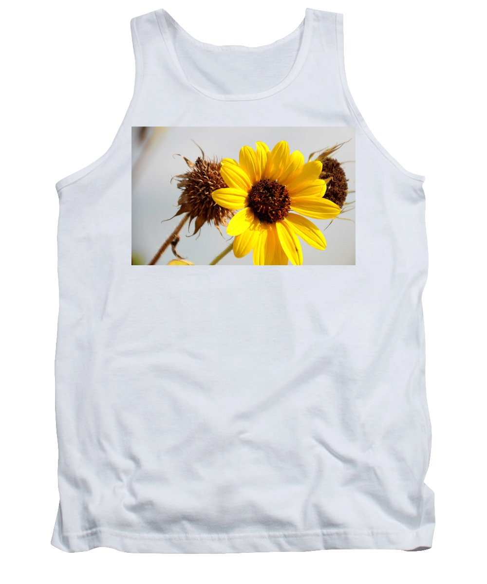 Sunflower Tank Top featuring the photograph Sunflower Stages by Amy Steeples
