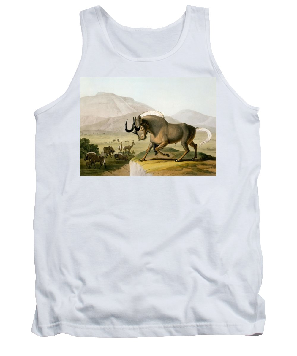 Gnoo Tank Top featuring the drawing The Gnoo, 1804 by Samuel Daniell